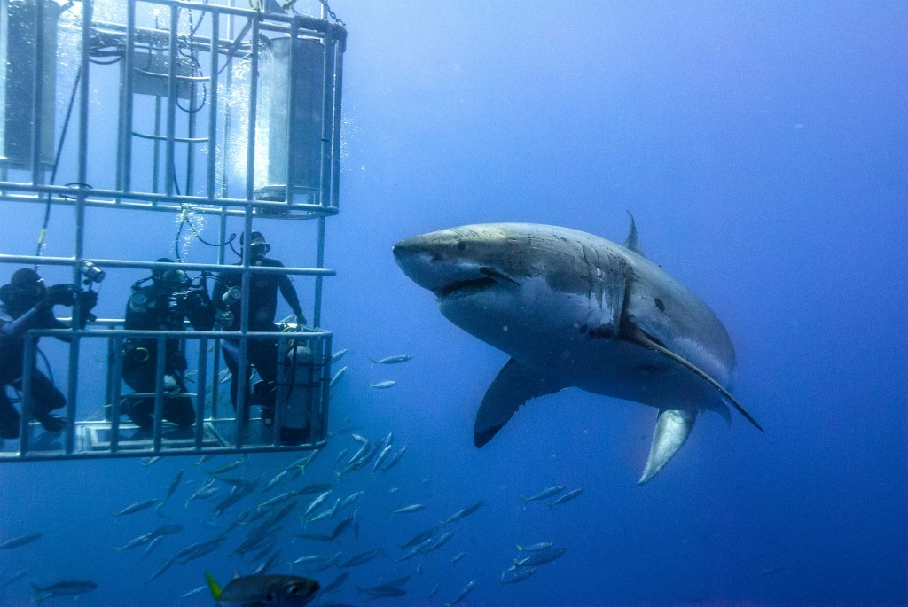 Shark Cage diving random picture